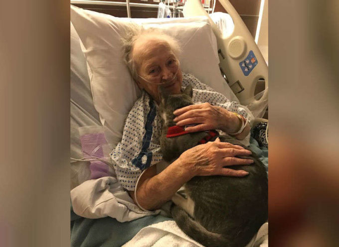 Gattino cieco conforta la nonna malata in ospedale
