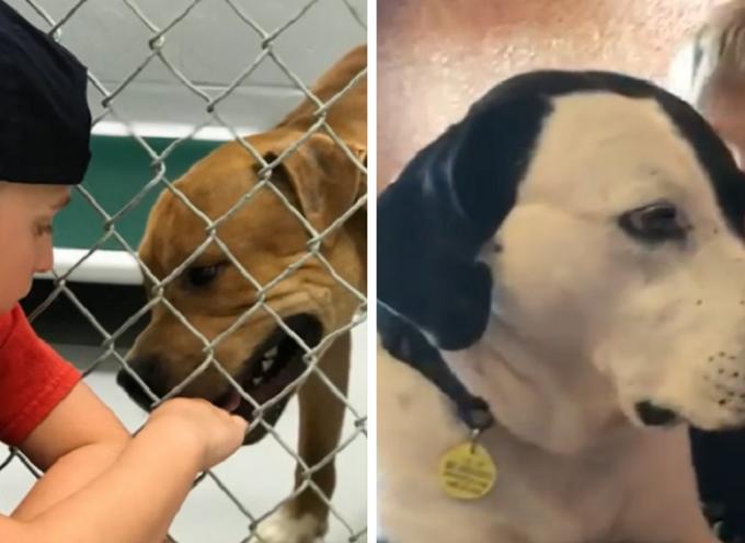 Ramon, il bimbo di 7 anni che ha salvato più 1000 cani