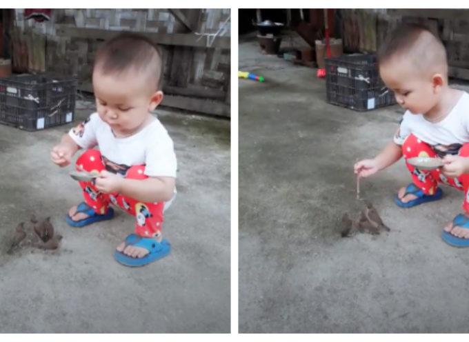 In un video un bambino nutre degli uccelli con tanta naturalezza e diventa subito virale