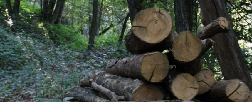 In aumento l'abbattimento illegale di alberi sull'Appennino
