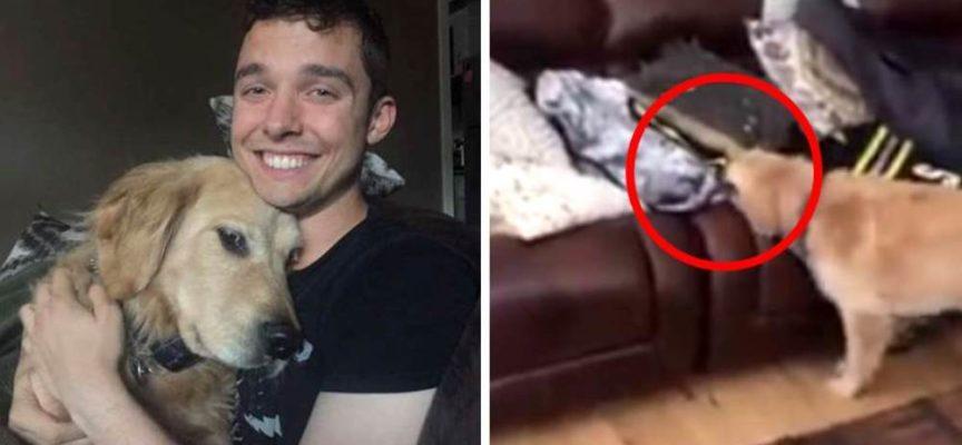 Dopo 7 mesi di lontananza, l'emozionante incontro tra un cane e il suo amico pilota