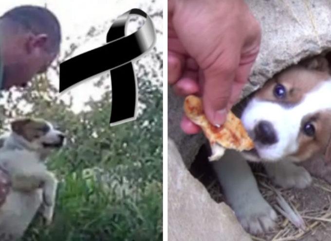 La toccante promessa di un soccorritore a un cane morto dopo aver dato alla luce i loro cuccioli
