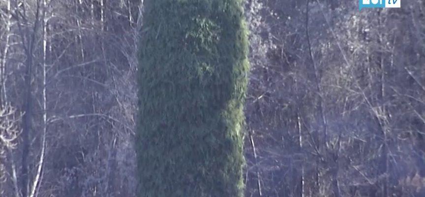 Dalla notte dei tempi…la magia dei Natalecci di Gorfigliano[VIDEO]