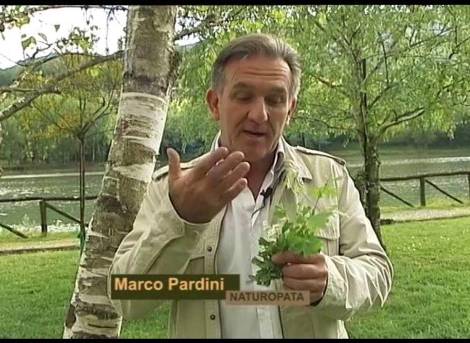 I colori del serchio Le betulle e rifugio alpi apuane con Marco Pardini di Abramo Rossi[VIDEO]