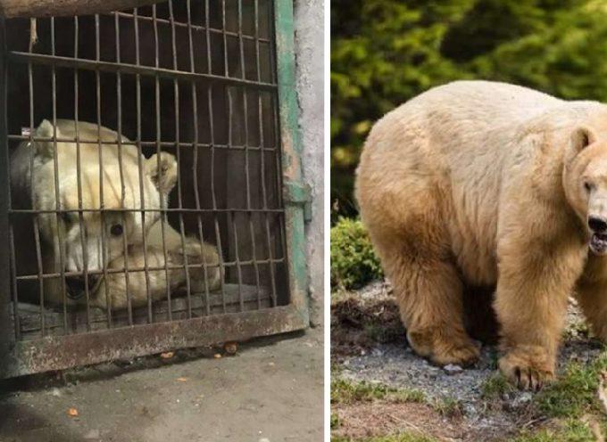 """Dopo una vita passata tra circhi e zoo, un orso vede per la prima volta la sua """"casa naturale"""""""