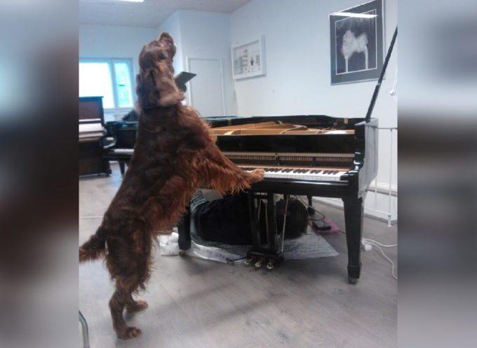 La storia di Elmo. Il cane che sa suonare e cantare