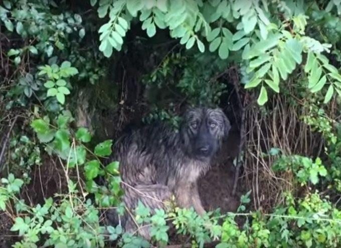 Il cane salvato sotto la pioggia stava morendo di tristezza perchè non sapeva il motivo per cui è lasciato nell'oblio