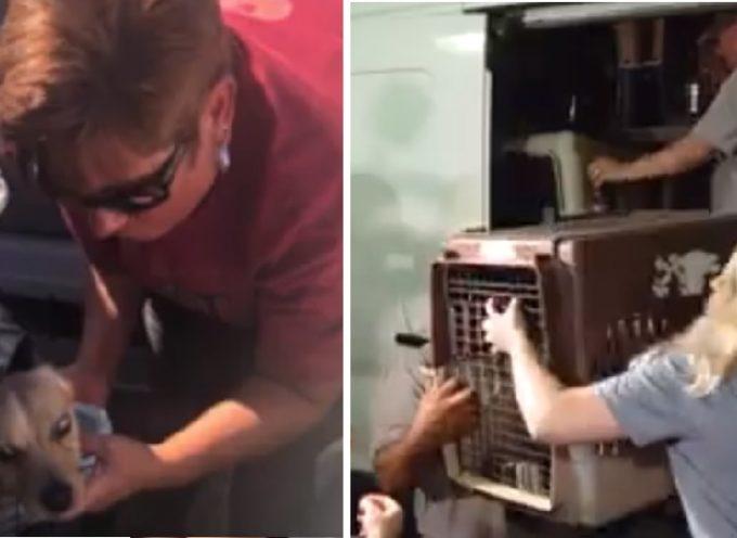 Salvano più di 30 cani e gatti abbandonati dopo l'evacuazione dell'uragano Florence