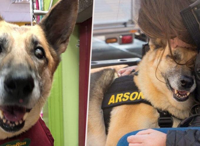 Dopo un passato traumatico, un cane malato terminale riesce a completare la sua lista dei desideri