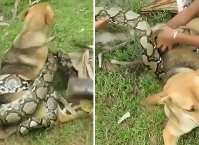3 Ragazzi contro la terribile morsa del Boa Constrictor per salvare il loro cane