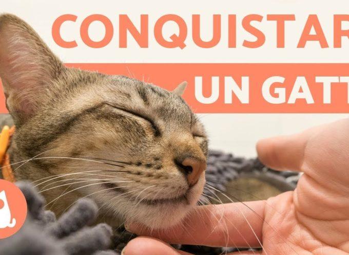 Come conquistare LA FIDUCIA di un gatto 🐾🐈 5 CONSIGLI utili!