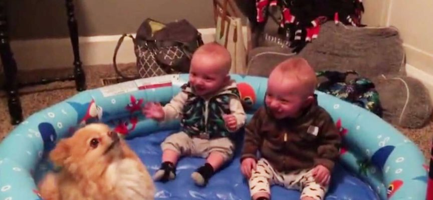 Ilarità allo stato puro : 2 gemelli rimasti con il cagnolino nella piscina gonfiabile