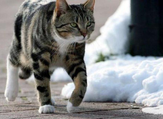 Morta la nonna dei gatti: si è accasciata in strada a 84 anni dopo l'ultimo pasto ai suoi randagi