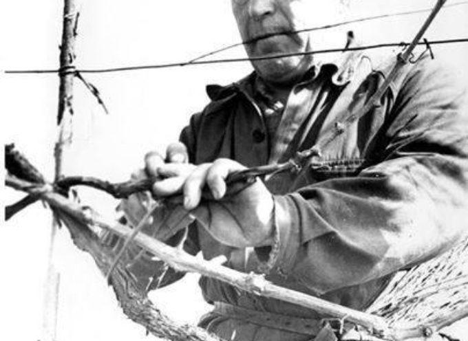 Gennaio…È il momento della potatura invernale, detta anche potatura secca,