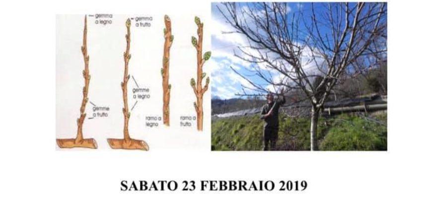 Anche quest'anno Corso di Potatura! Aperte le iscrizioni. — presso Az. Agr. FIORI RITA di Poli Barbara.