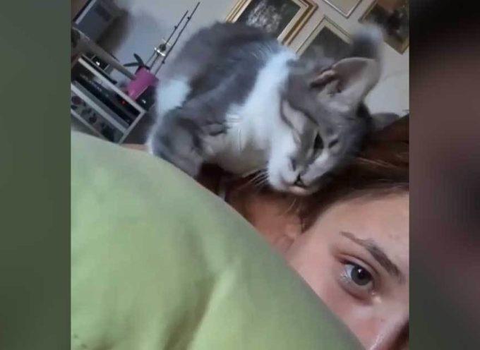 Dolce gattino in cerca di coccole