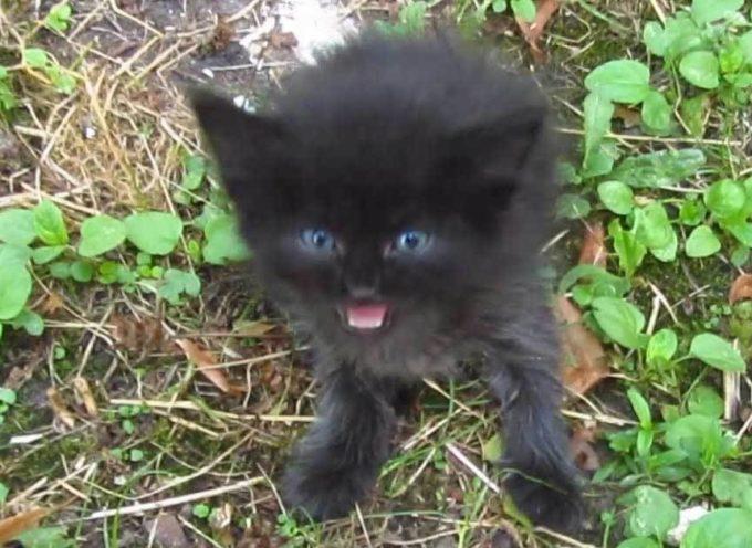 Il buon samaritano ha trovato un minuscolo gattino nero e gli ha dato una casa per sempre