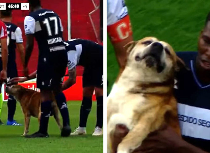 Un cane spacciato interrompe la partita di calcio per ricevere le coccole dai giocatori