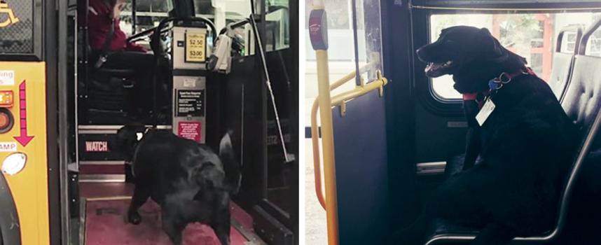 Questo cane prende da solo l'autobus, ogni giorno per andare al parco