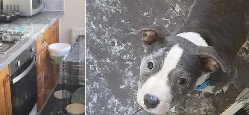 Il proprietario torna a casa e trova la cucina con le nuovi decorazioni realizzati dal suo cane