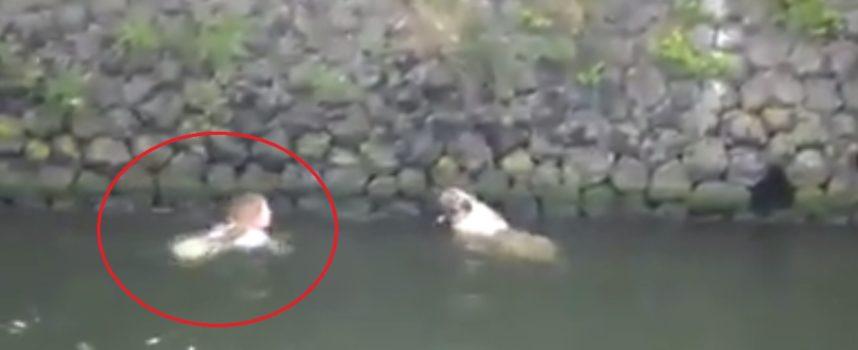 Una Donna rischia la vita per salvare un cane che non può uscire dall'acqua