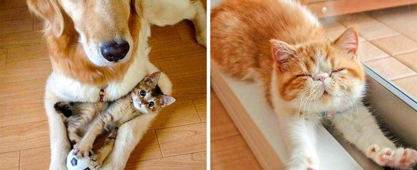 25 foto che dimostrano che i gatti sono la cosa più carina che esiste sulla faccia della terra