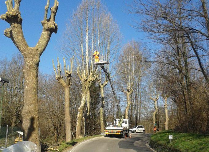proseguono gli interventi sulle alberature lungola strada provinciale n. 1 Francigena (via per Camaiore)
