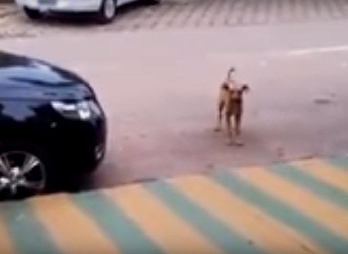 La danza di questo cane è stata vista da più di 6 milioni di persone