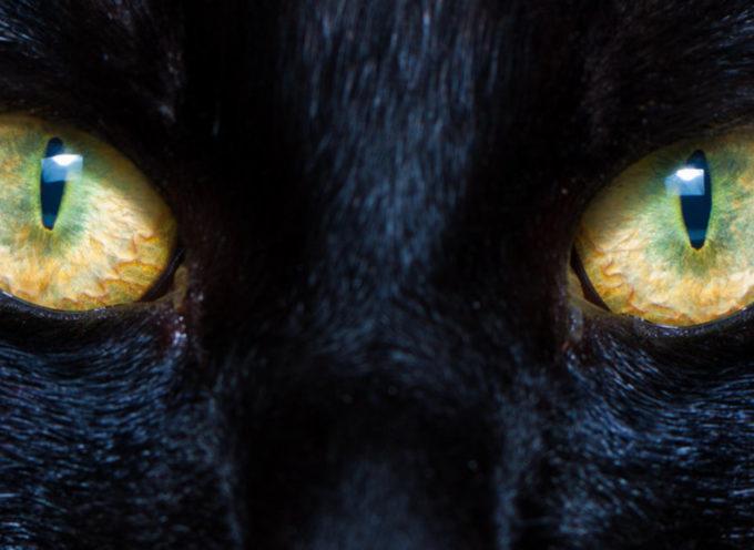 GATTI – Proteggono te e la tua casa da fantasmi e spiriti negativi?