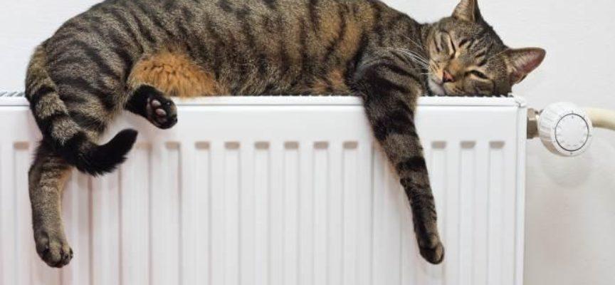 Bonus termosifoni 2019: come richiederlo e a chi spetta