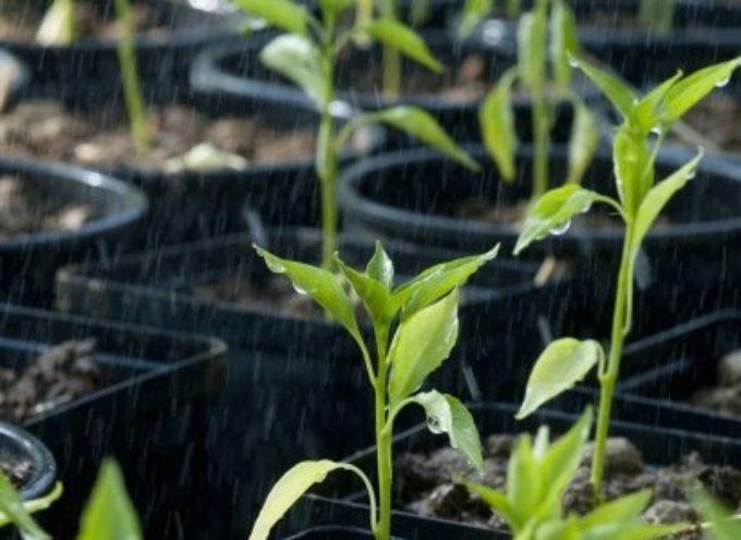 Come fare l'orto. La preparazione del terreno