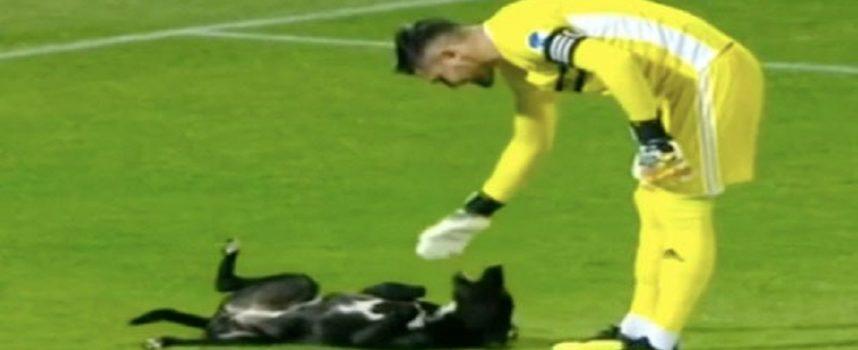 """Un cane adorabile invade il campo da calcio e """"chiede"""" un massaggio sul ventre dal portiere"""