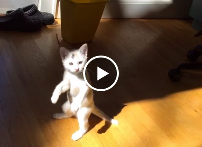 Un gattino carino combatte contro la luce del sole