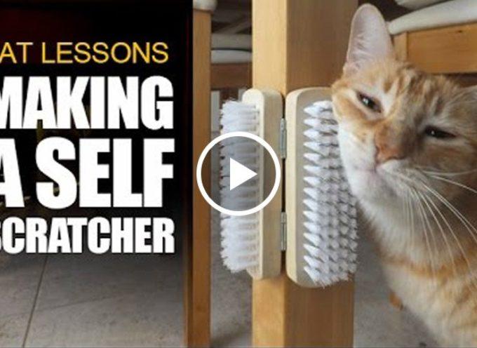 Come farsi da soli un Scratcher per gatti