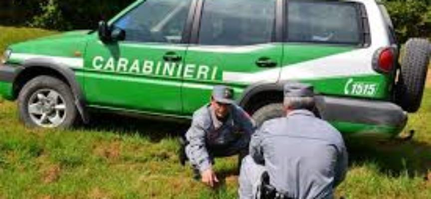 TUTELA DELL'AMBIENTE. INTERVENTI DEI CARABINIERI FORESTALI DELLA PROVINCIA DI LUCCA