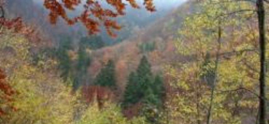 """Remaschi: """"Dalla Regione oltre 150 milioni per le foreste""""."""