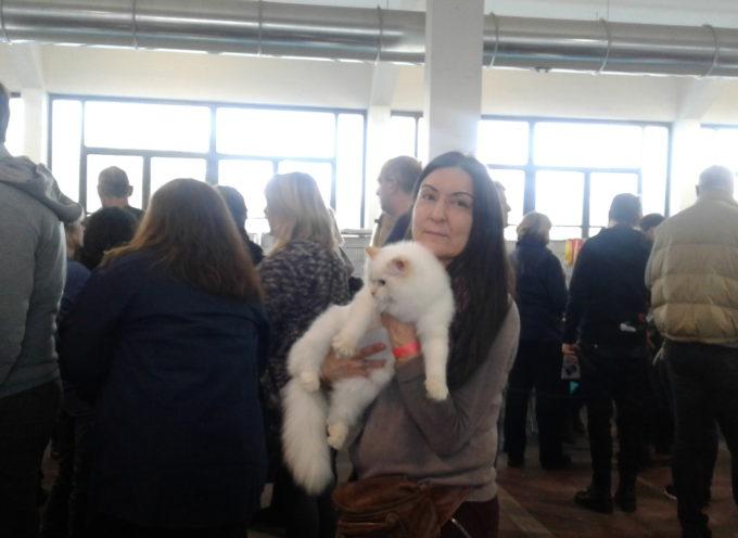 Torna l'Esposizione Internazionale Felina,  – Il 26 e 27gennaio 2019 al Polo Fiere di Lucca