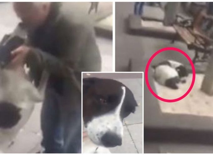 L'emozionante incontro di un vecchio con il suo cane dopo averlo perso 3 anni prima