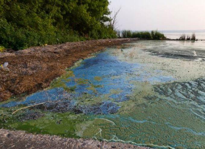 Quanto inquina il nostro bucato? Le MARCHE dei detersivi più dannosi per il mare