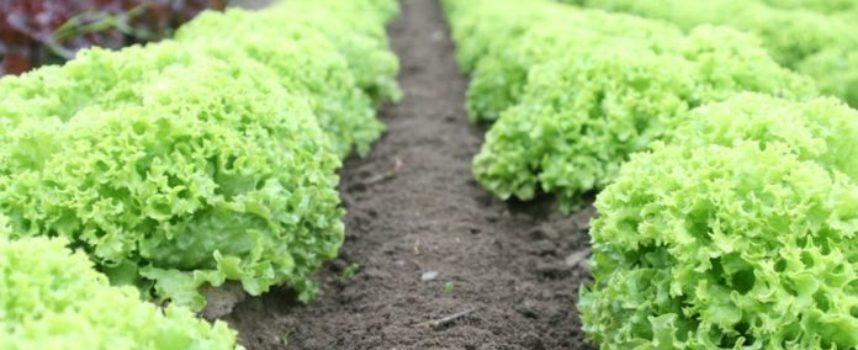 Sicurezza alimentare e sostanze chimiche. Il sistema UE sottoposto a forti pressioni.