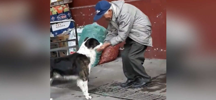 Un gesto semplice dell'uomo per il cane assetato ha toccato i cuori in tutto il mondo