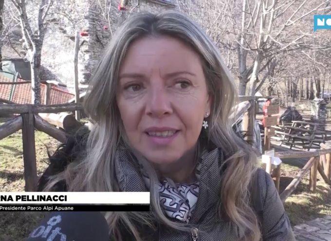 """Mirna Pellinacci """" Onorata del ruolo di vice presidente del Parco Alpi Apuane """""""