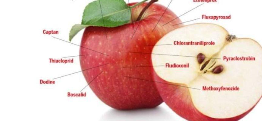 Mele rosse avvelenate dai pesticidi. Le migliori e le peggiori vendute in Italia
