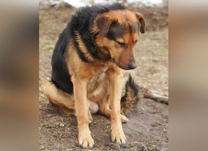 Gli ordinarono di non muoversi e il cane attese una settimana senza capire che era stato abbandonato