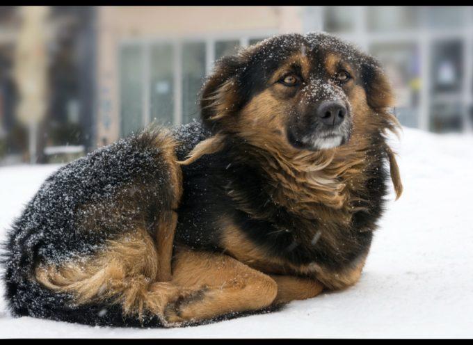 Legge vieta di lasciare il cane fuori al freddo, e in Italia?