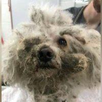 Abbandonato in casa, questo cane sopravvive grazie all'acqua del water