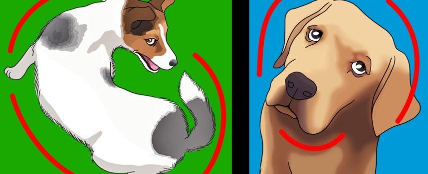 14 errori da evitare quando siamo proprietari di animali domestici