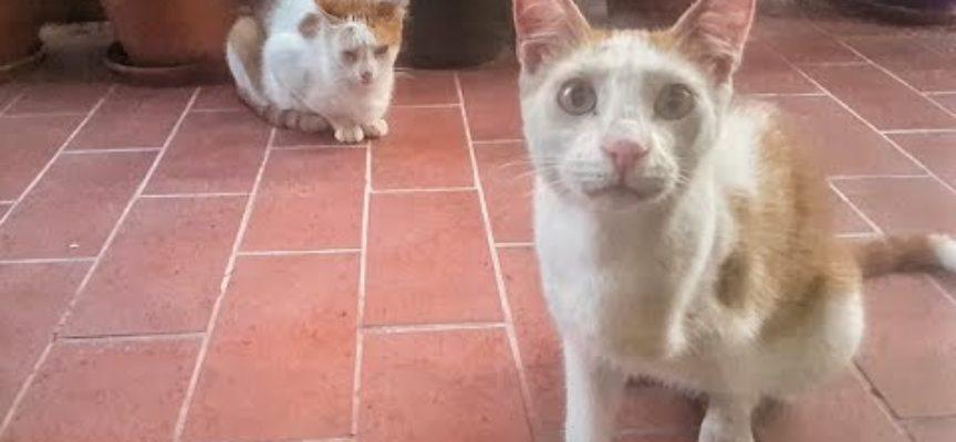 Vi farà emozionare l'amore di questi due gatti gemelli!