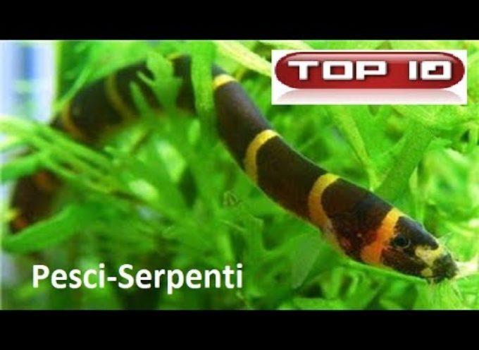 Top 10 Pesci anguilliformi per acquario dolce