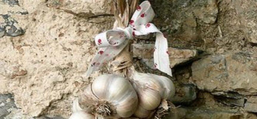 L'aglio è una coltivazione che non dovrebbe mancare in ogni buon orto,
